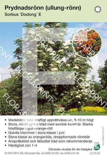 Sorbus Dodong E