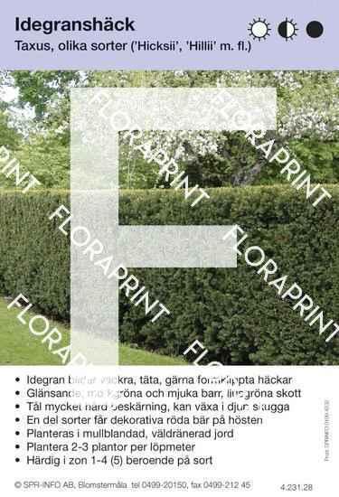 Taxus allmän (sorter:)