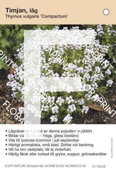 Thymus vulgaris Compactum