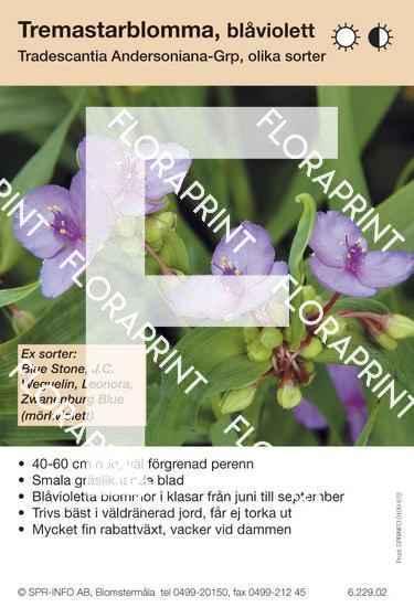 Tradescantia andersoniana allm blåviolett (sorter:)