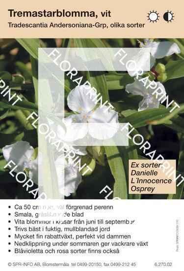 Tradescantia andersoniana allm vit (sorter:)