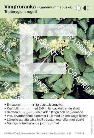 Tripterygium regelli