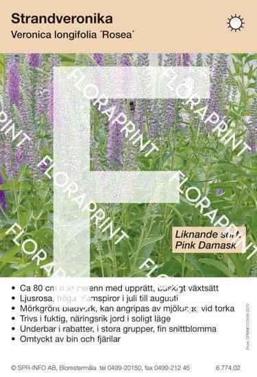 Veronica longifolia Rosea (likn sort:)