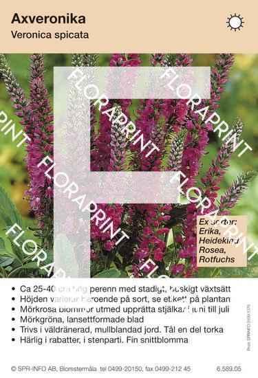 Veronica spicata allm mörkrosa (sorter:)