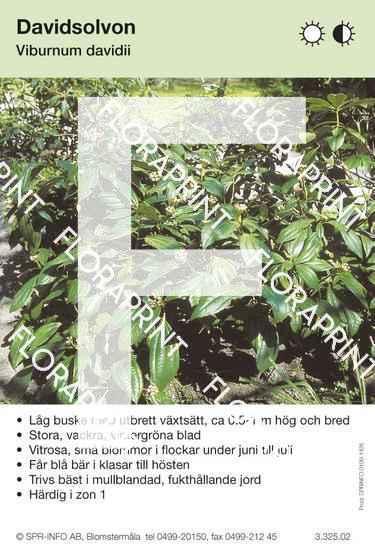 Viburnum davidii