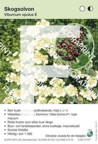 Viburnum opulus E