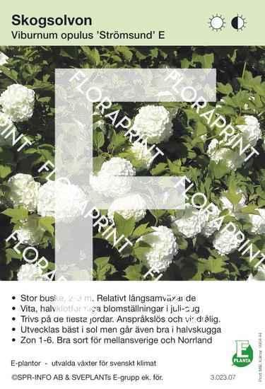 Viburnum opulus Strömsund E