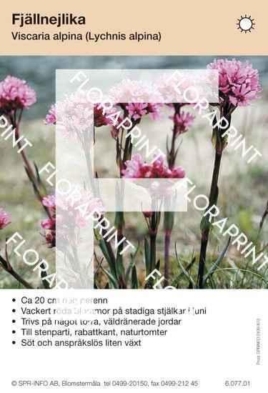 Viscaria (fd Lychnis) alpina